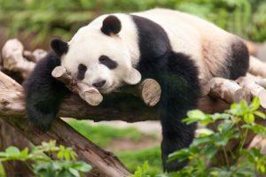 Mit Akupunktur schlafen wie ein Bär