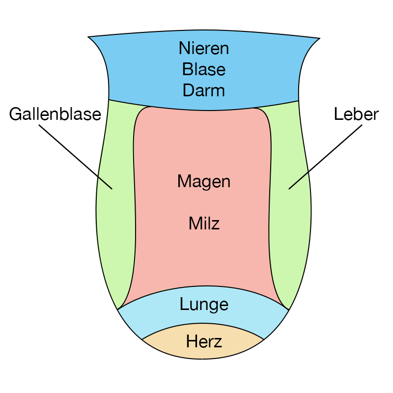 TCM Zungen - Diagnose